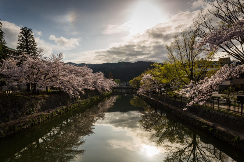 Where to see cherry blossom in Japan by Pixelicious – 001