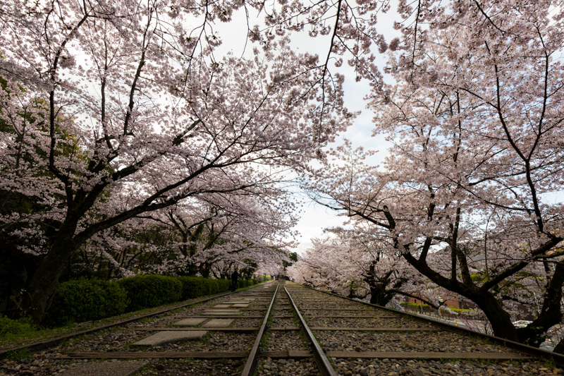 Where to see cherry blossom in Japan by Pixelicious – 005